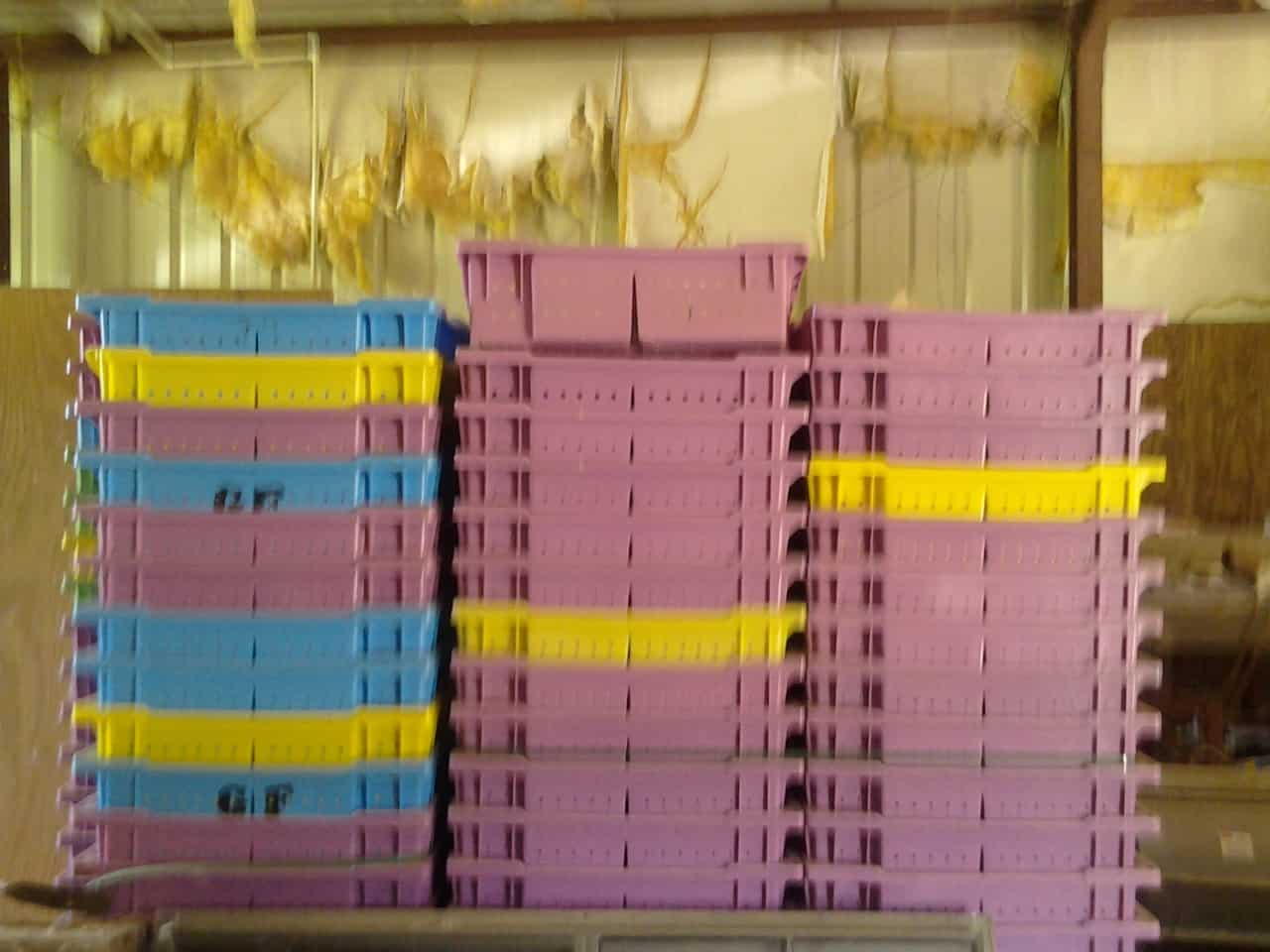 Blueberry Lugs – quantity of 1200