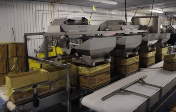 Blueberry Packing Line – High Volume